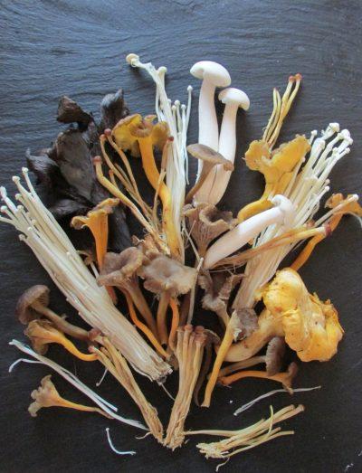 mushroom_bouquet